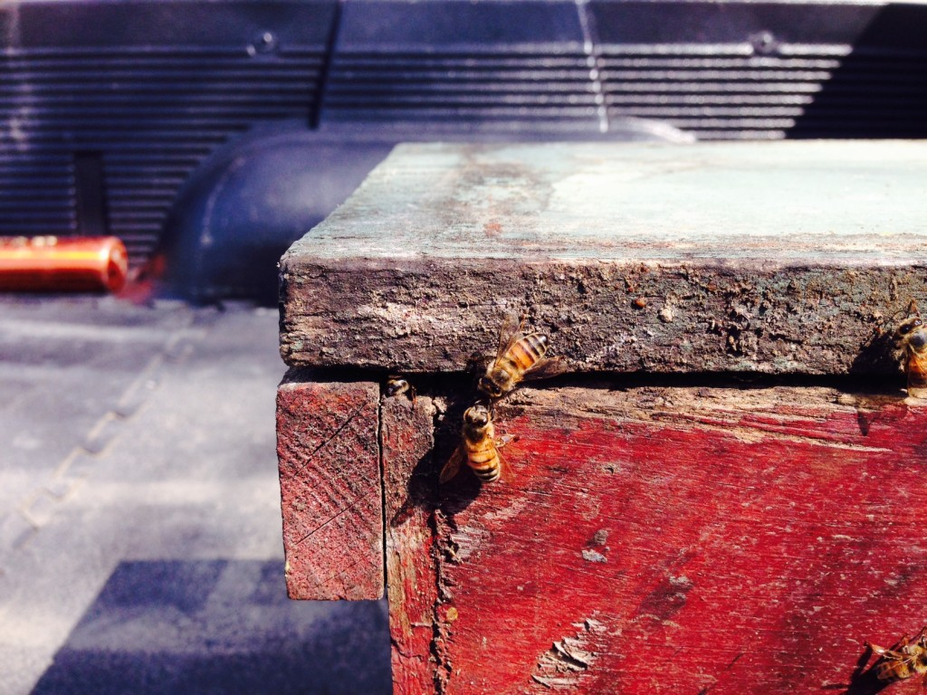 Bees - Decline of honeybees