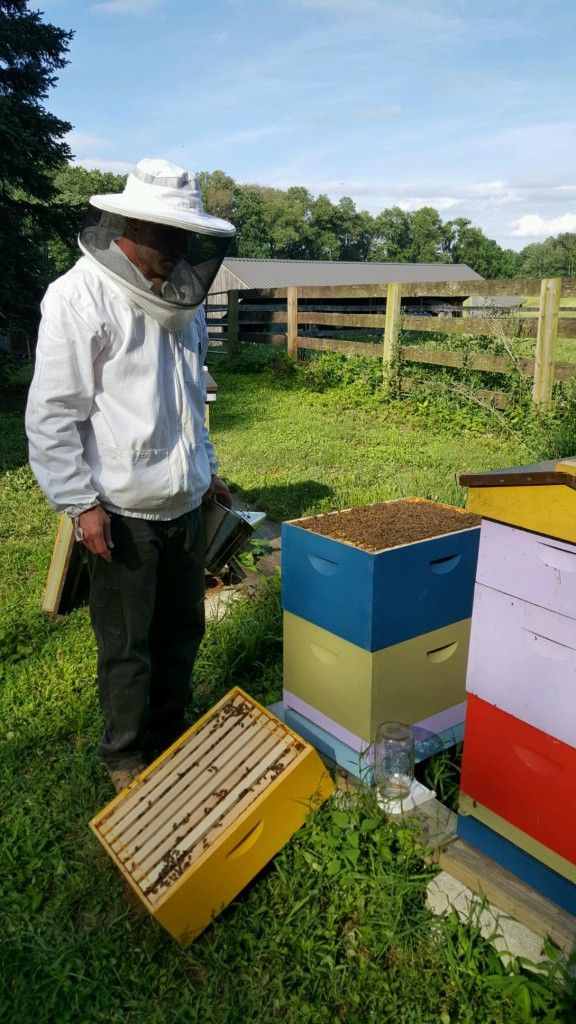 Shaun with Bees - Decline of honeybees