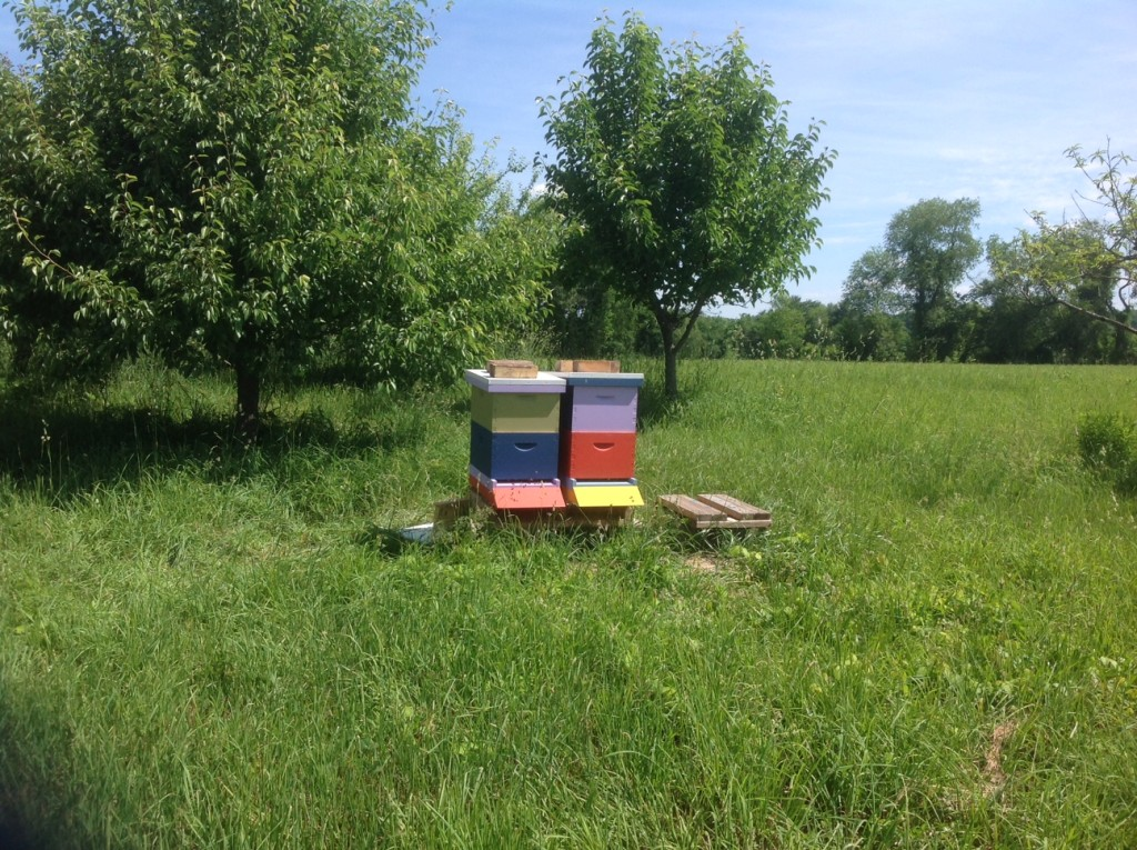 Bee hives - Decline of honeybees