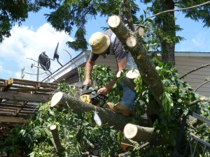 Trim Trees - Complete Your Written Hurricane Plan - Hurricane Preparedness Week