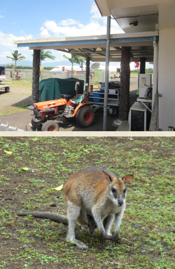 Airport and wallaby - RV Roger Revelle